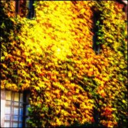 Herbstliche Fassade