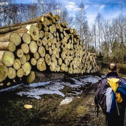 Holzeinschlag !