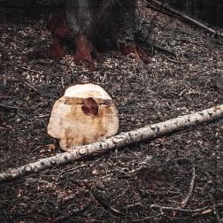 """""""Ein Ensemble`""""- Baumschnitt mit Stäbchen"""