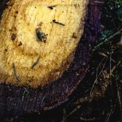 """""""Baumschnitt"""" - gesehen auf einer Wanderung"""