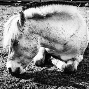 """Pferd ist müde"" 2018"