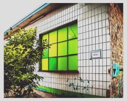 Grünes Fenster in KS - schrill.