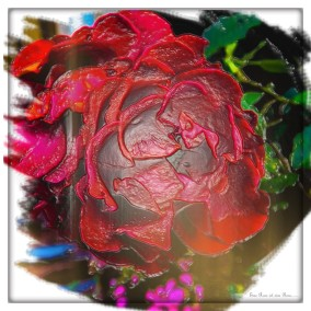 Magdeburger Rose (in Plastik)