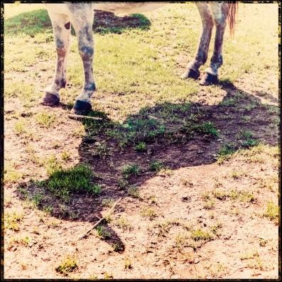 Dorfkrug - 4x Esel
