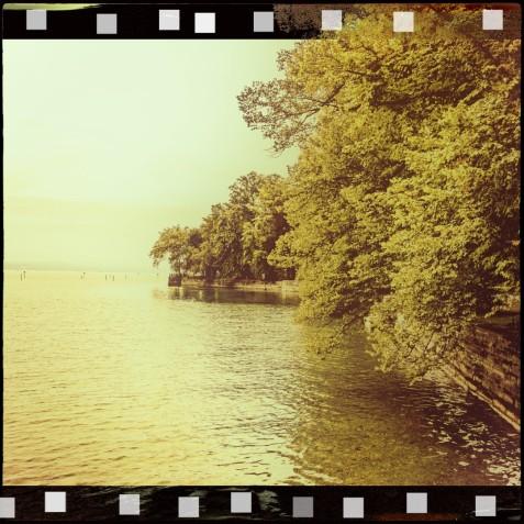 Bäume im Park am See