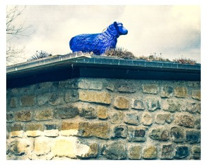 blaues Schaf auf Dach....