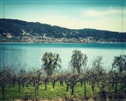 Der See im Frühjahr....
