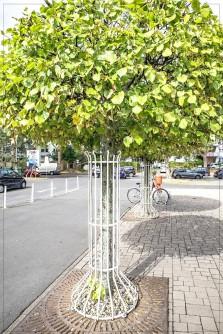 Baum - sehr beschützt; bei Realkauf