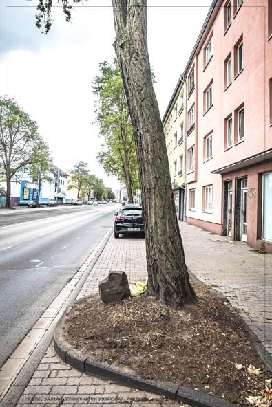 Ein Baum der 7000 Eichen - Documenta 7 / Weserstr.