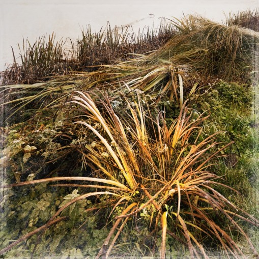 Grasbüschel am Ufer