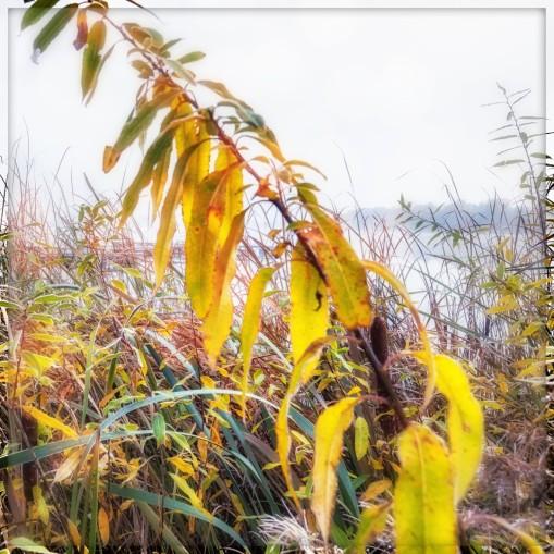 Uferpflanze