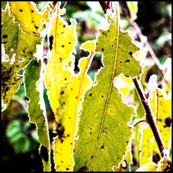 Pflanzen in Kälte