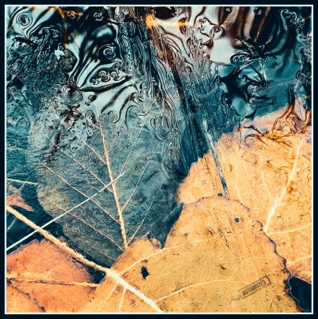 Blätter im See