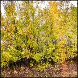 Der Herbst kommt