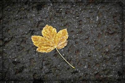 HerbstblattHerbstblatt
