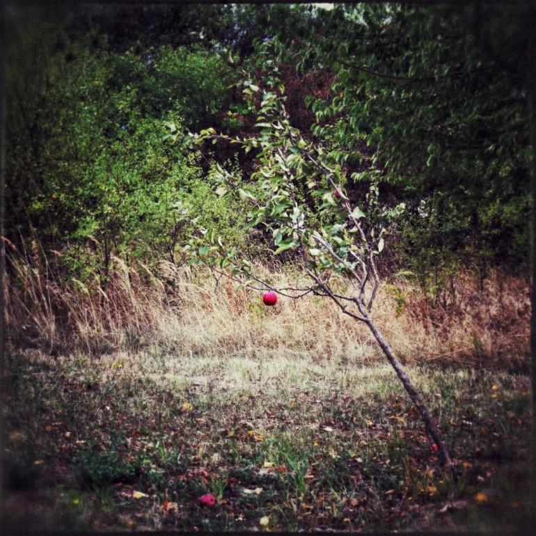 ---IMG_5831_Snapseed (Groß)
