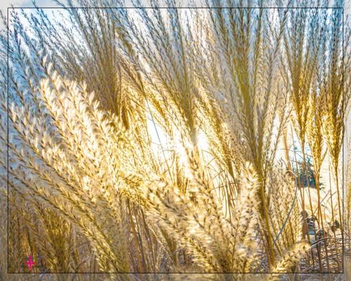 Palmen- und Kurgarten