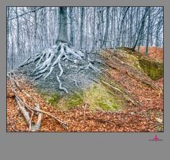 Natur und Drumherum